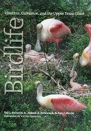 Birdlife of Houston  Galveston  and the Upper Texas Coast
