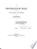 Le prothallium male des cryptogames vasculaires