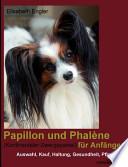 Papillon und Phalène (kontinentaler Zwergspaniel) für Anfänger