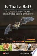 Is That a Bat?