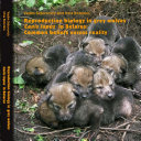 Reproduction biology in grey wolves Canis lupus in Belarus  Common beliefs versus reality
