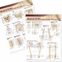 Lippincott Williams and Wilkins Atlas of Anatomy Skeletal System Chart Set