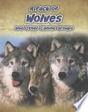 A Pack of Wolves and Other Canine Groups