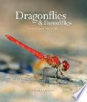 Dragonflies   Damselfies