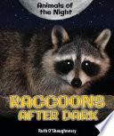 Raccoons After Dark