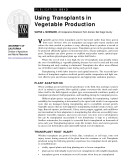 Using Transplants in Vegetable Production