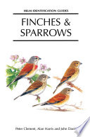 Finches and Sparrows