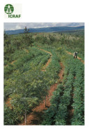 International Council for Research in Agroforestry: annual report, 1988