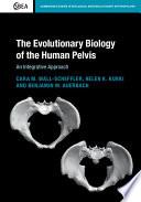 The Evolutionary Biology Of The Human Pelvis
