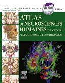 Atlas de neurosciences humaines de Netter Pdf
