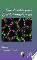 Tissue Remodeling and Epithelial Morphogenesis