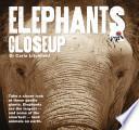 Elephants Closeup