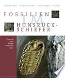 Fossilien im Hunsrück-Schiefer
