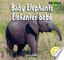 Elephants   Elefantes beb
