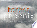 Read Online Forest Phoenix For Free
