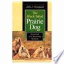 The Black Tailed Prairie Dog