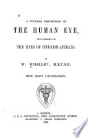 A Popular Description of the Human Eye