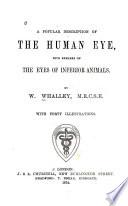 A Popular Description of the Human Eye