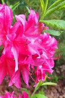Pretty Pink Summer Flowers Journal