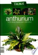 Anthurium, 175 Jenis Eksklusif 350 Foto