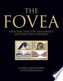 The Fovea