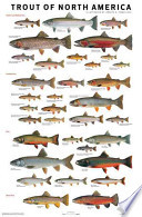 The Trout of North America