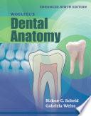 Woelfel s Dental Anatomy  Enhanced Edition