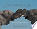 Elephant s Life