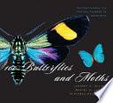 100 Butterflies And Moths Book PDF