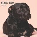 Black Labs Calendar 2021