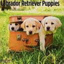 Labrador Retriever Puppies 2019 Wall Calendar