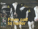 From Calf to Heifer