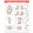 Athletic Injuries of the Knee