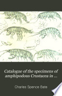 Catalogue of the Specimens of Amphipodous Crustacea in the Collection of the British Museum