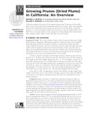 Growing Prunes (Dried Plums) in California: An Overview