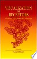 Visualization of Receptors
