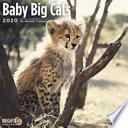 2020 Little Big Cats
