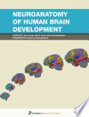 Neuroanatomy of Human Brain Development