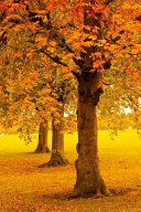Beautiful Autumn Trees in the Park Journal