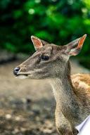 Deer Journal