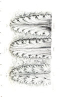 Guide for Drawing the Acanthus, and Every Description of