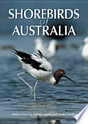 Letters To The Family The Story Of An Endangered Shorebird _ ROSE CLEAR