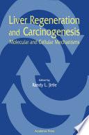 Liver Regeneration And Carcinogenesis