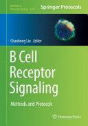 B Cell Receptor Signaling