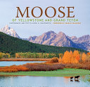 Moose of Yellowstone and Grand Teton