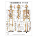 Cover of The Skeletal System