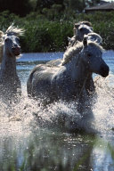 2020 Weekly Planner Horse Photo Equine Ponies Crossing Water 134 Pages
