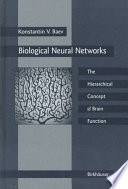 Biological Neural Networks  Hierarchical Concept Of Brain Function