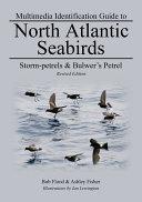 Storm-petrels & Bulwer's Petrel