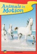 Animals in Motion - 6 pk.